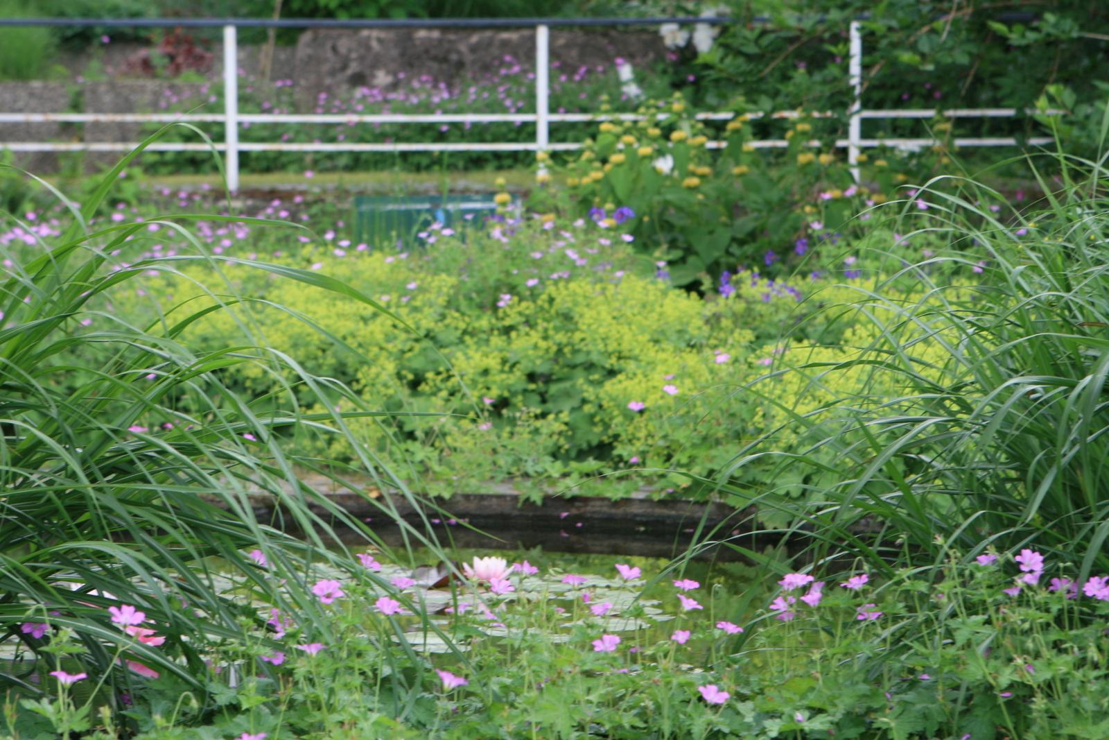 1 img kf garten erfurt jhg 36 karl foerster der for Garten in erfurt