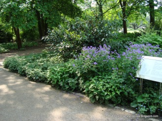 1-Marzahn-Karl-Foerster-Garten-7305